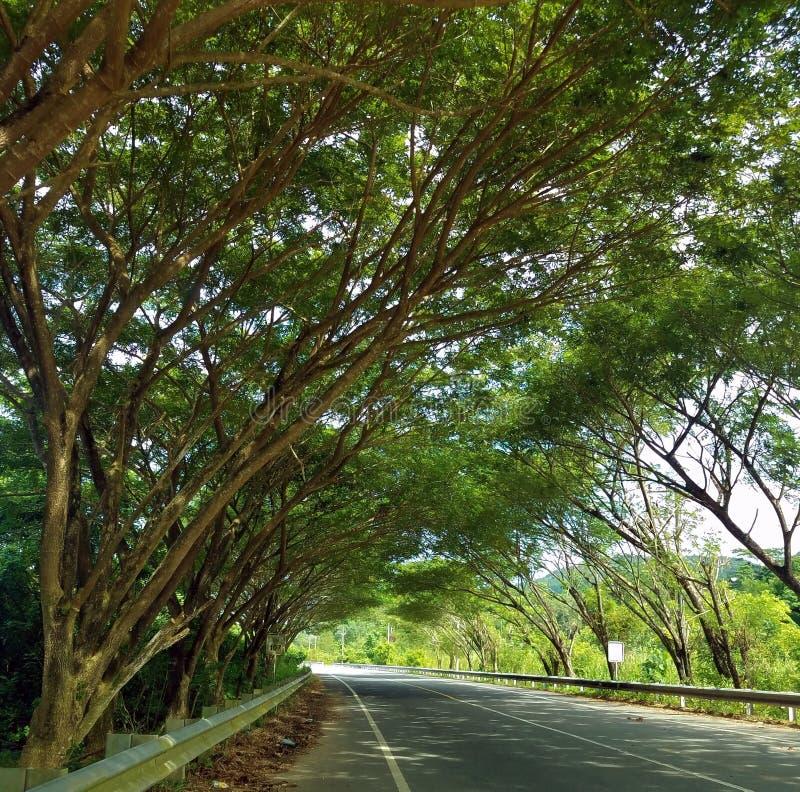Lhok Kruet, Long Road to Geurutee Mountain, Lamno, Aceh Jaya arkivfoton