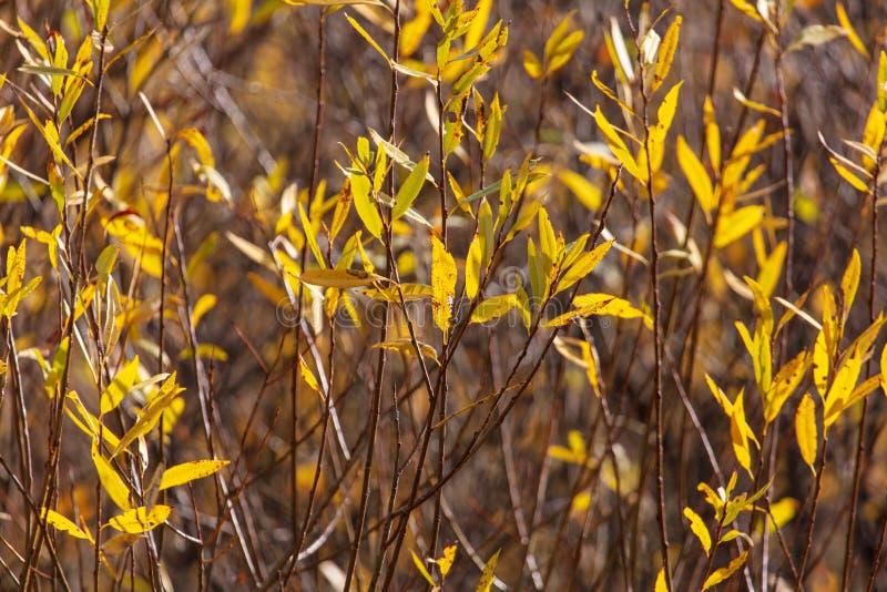 Liście na gałąź drzewo w jesieni obrazy royalty free