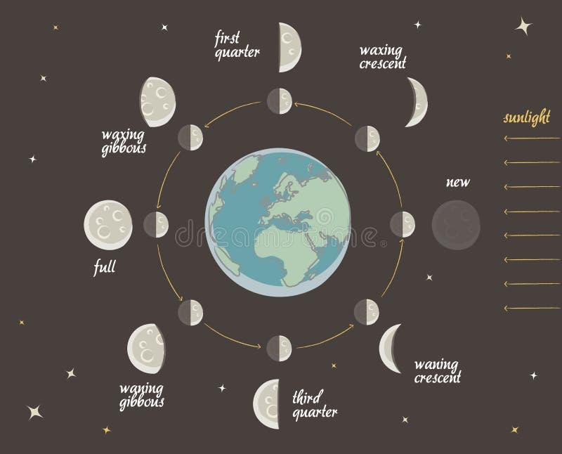 Lição da astronomia: Fases da lua ilustração do vetor