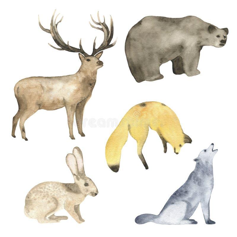 Lièvres et loup de renard d'ours de cerfs communs d'animaux de forêt d'aquarelle illustration stock