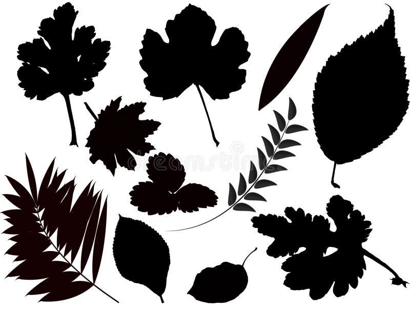 liść ilustracji