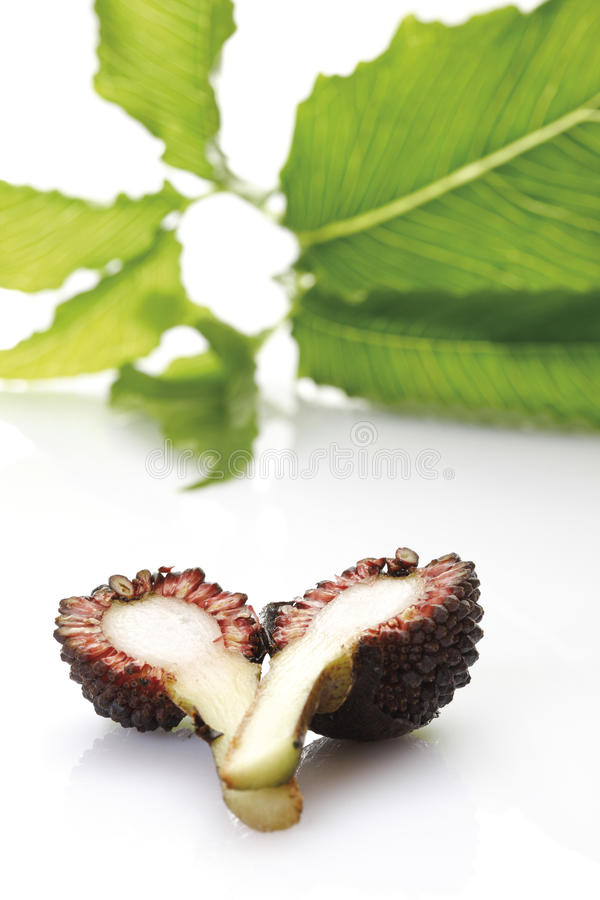 Liść ambony roślina i owoc (Arisaema) fotografia royalty free