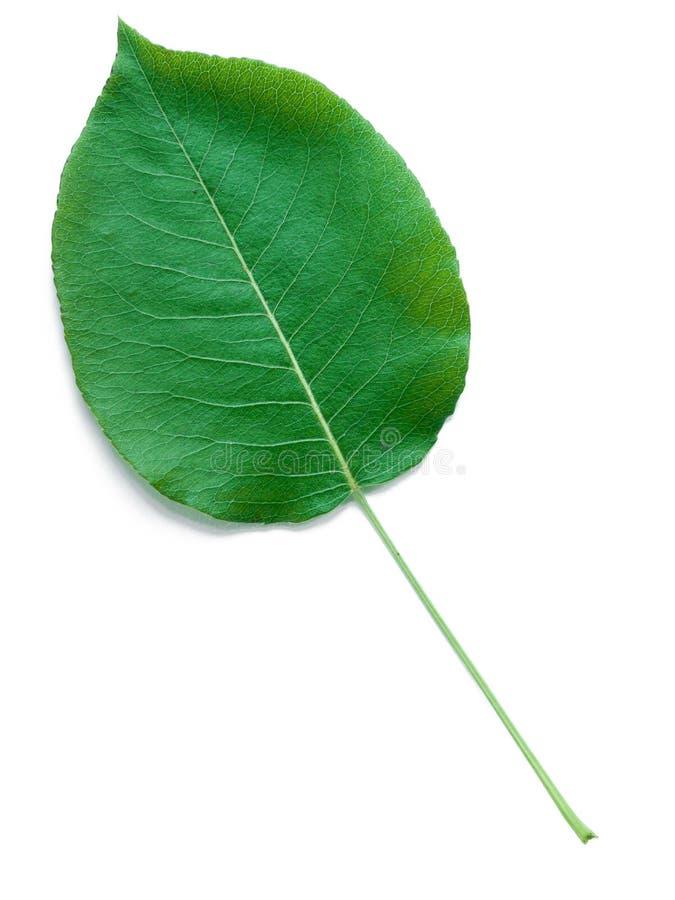 liść bonkrety drzewo obrazy royalty free