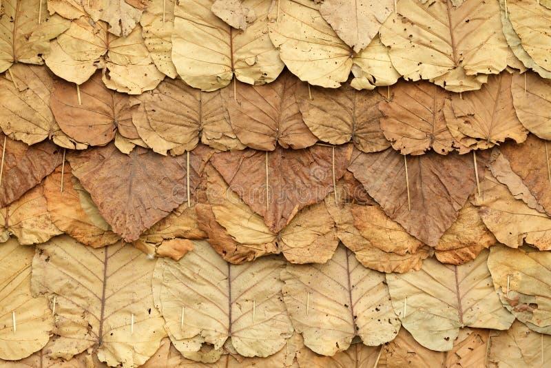 liść dach zdjęcie stock