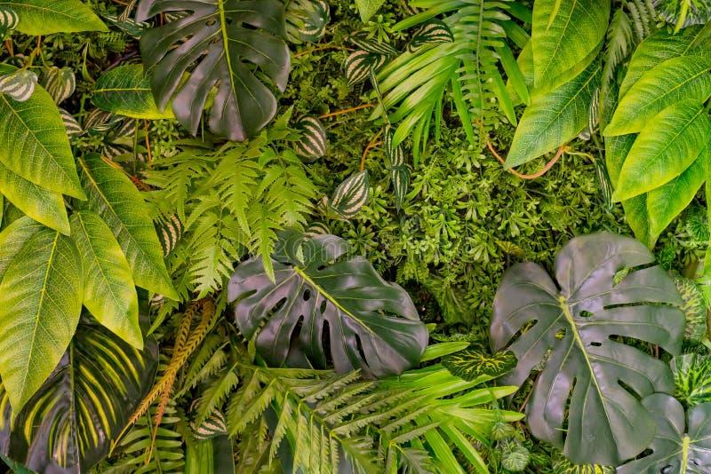 liść deseniują tropikalnego Zielony liścia egzot zasadza bezszwowego na ciemnym dżungli tle Artystyczny fotografia kolaż dla obraz royalty free
