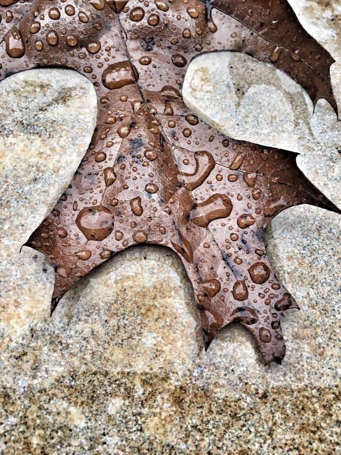 Liść i deszczówka obrazy royalty free