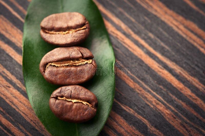 Liść i kawowe fasole zdjęcia royalty free