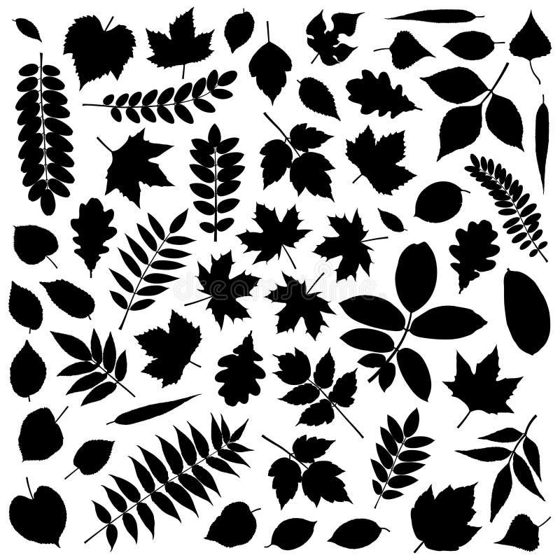 liść inkasowe sylwetki ilustracji