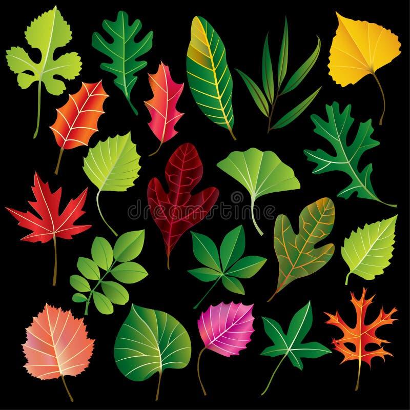 liść inkasowy wektor royalty ilustracja