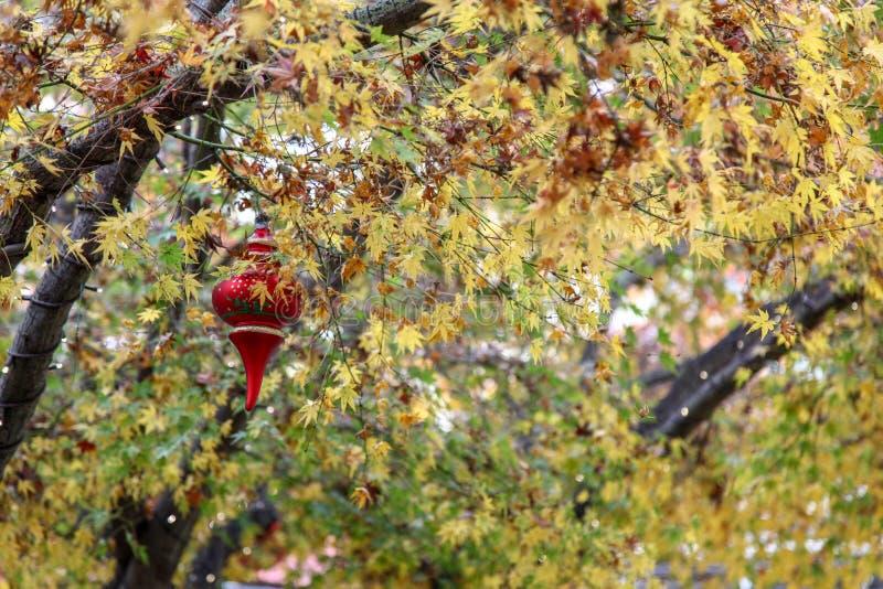 Liść jesień w usa obrazy stock