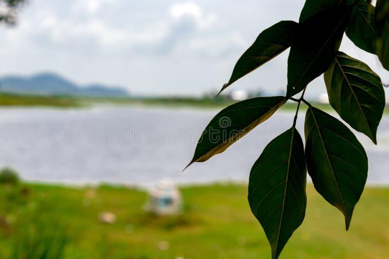Liść jest piękny zdjęcie stock