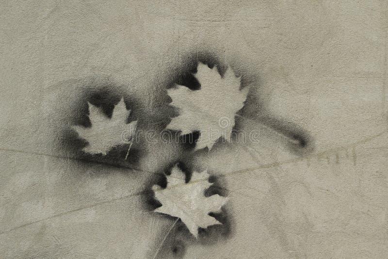 Liść klonowy na betonowej ściany tle zdjęcie royalty free