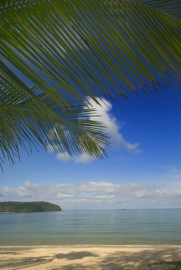 liść kokosowa palma fotografia stock