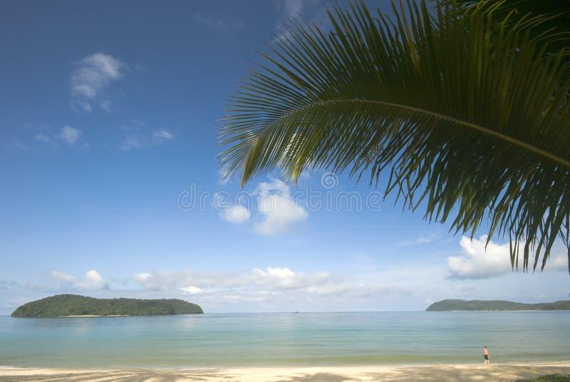 liść kokosowa palma zdjęcie stock