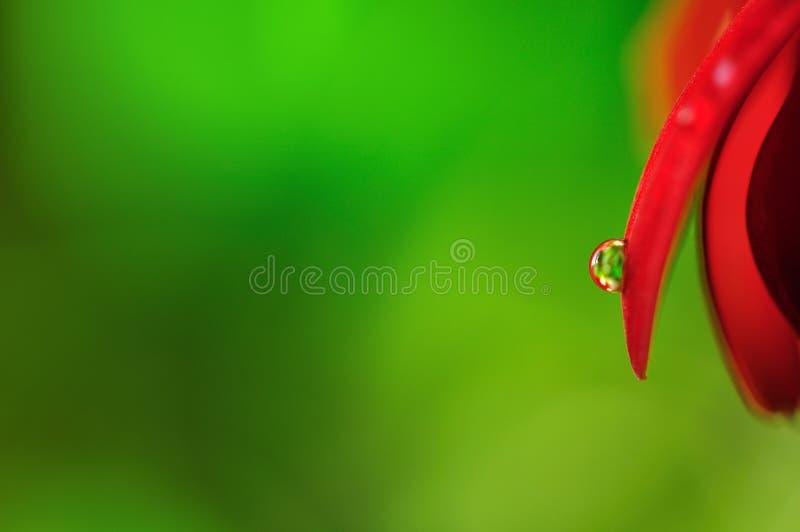 liść krystaliczny raindrop zdjęcie stock