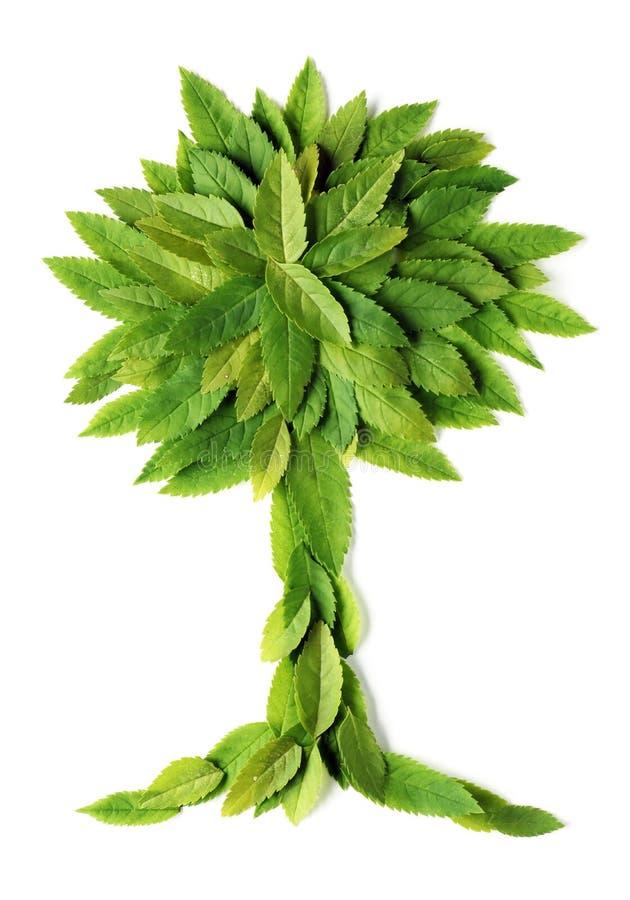 liść kształta drzewo zdjęcia stock
