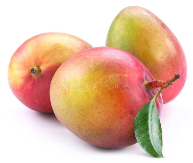 liść mango trzy zdjęcia stock