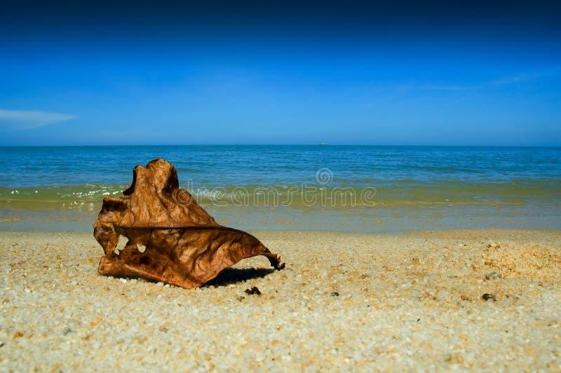 liść na plaży zdjęcie stock