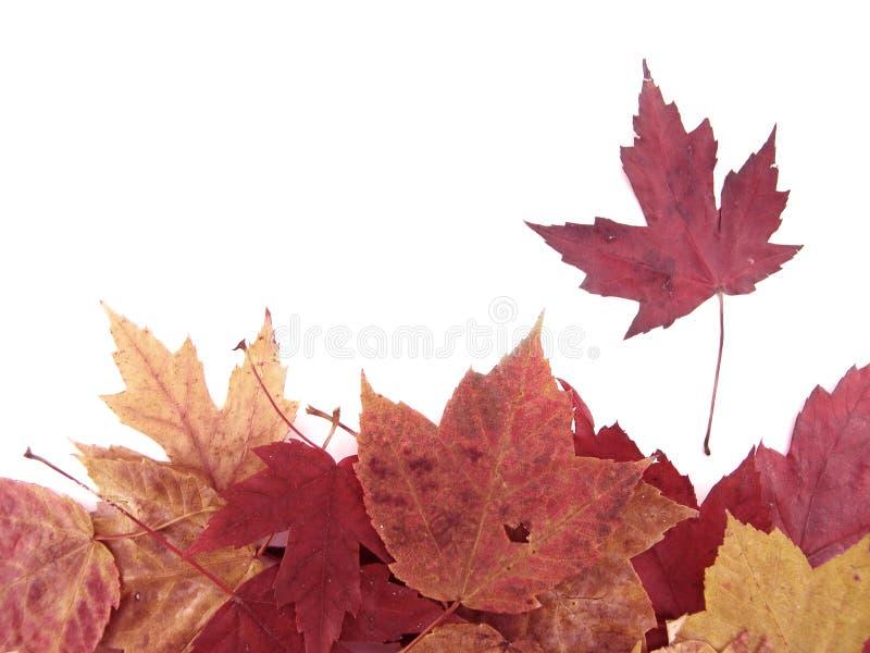 liść nad palowym biel zdjęcia royalty free