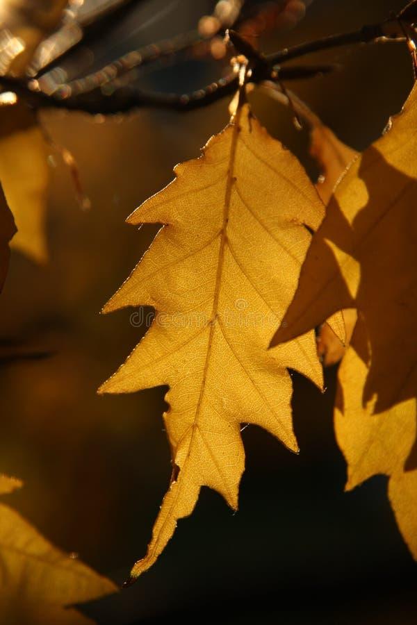 liść nbrunn sch obrazy stock
