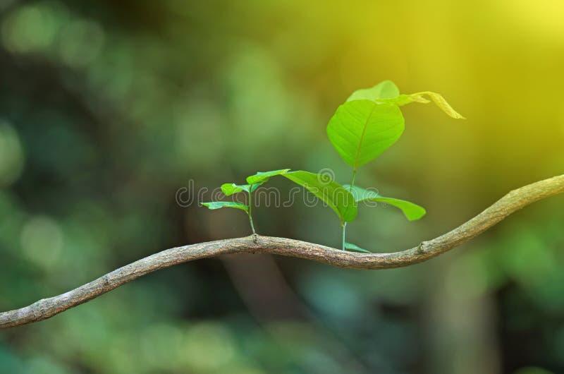 liść nowy promienia słońce zdjęcia stock