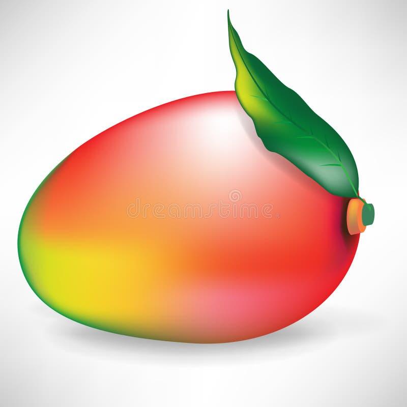 liść owocowy mango ilustracja wektor