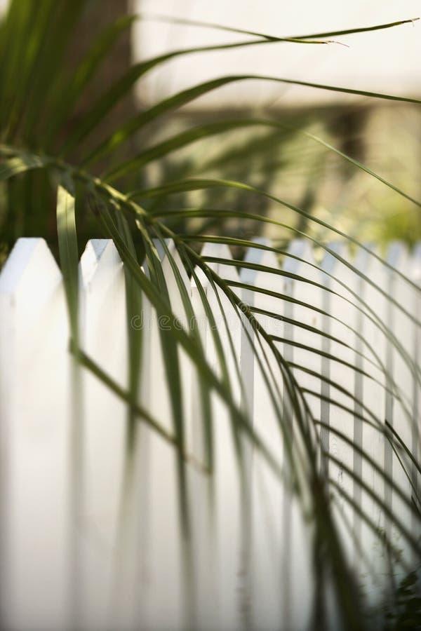 liść płotu w palm obrazy stock