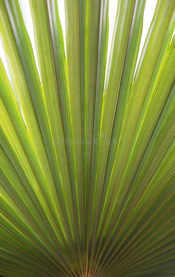liść palma zdjęcie royalty free