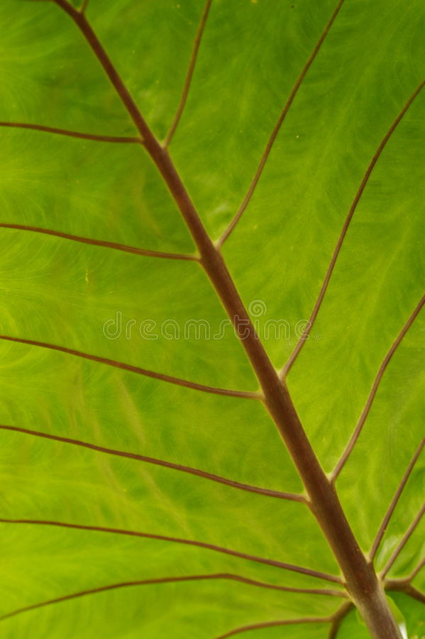 Liść palmowy liść obrazy stock