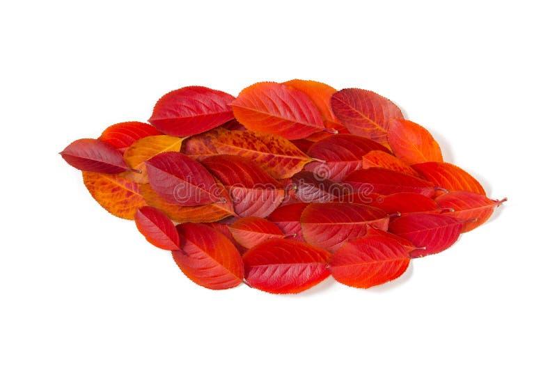 Liść robić z jesień liśćmi odizolowywającymi na białym tle obrazy stock