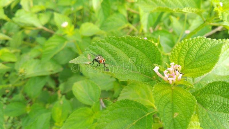 Liść siedzi dalej komarnicy - - zdjęcia stock