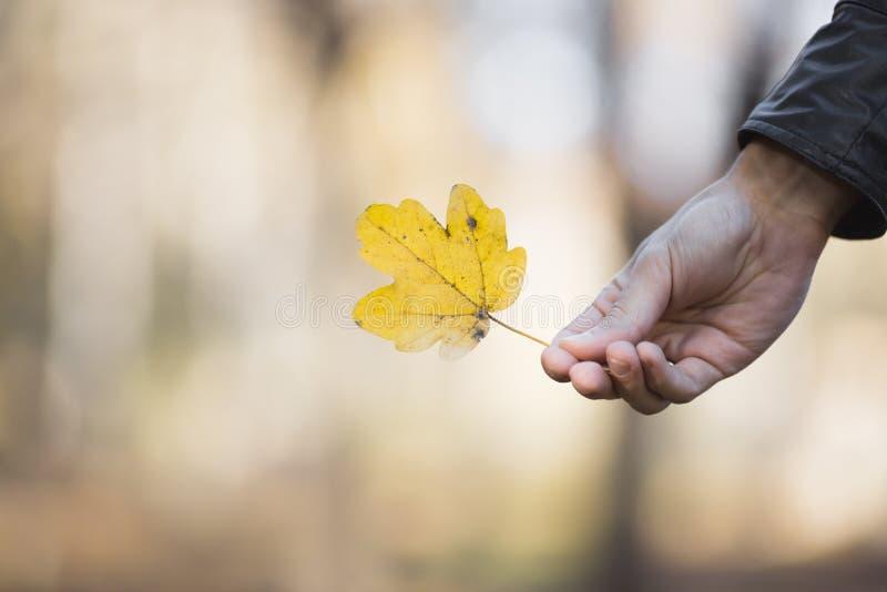 liść spadać kolor żółty zdjęcie stock
