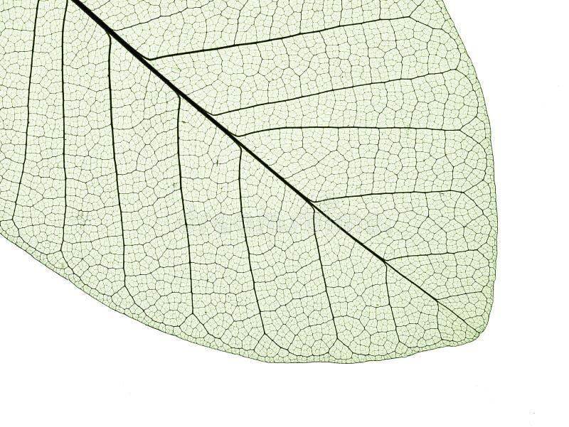 liść struktura zdjęcia stock