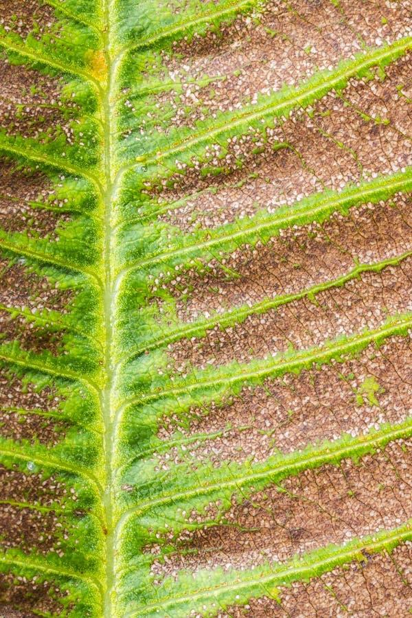 liść sucha tekstura obrazy stock