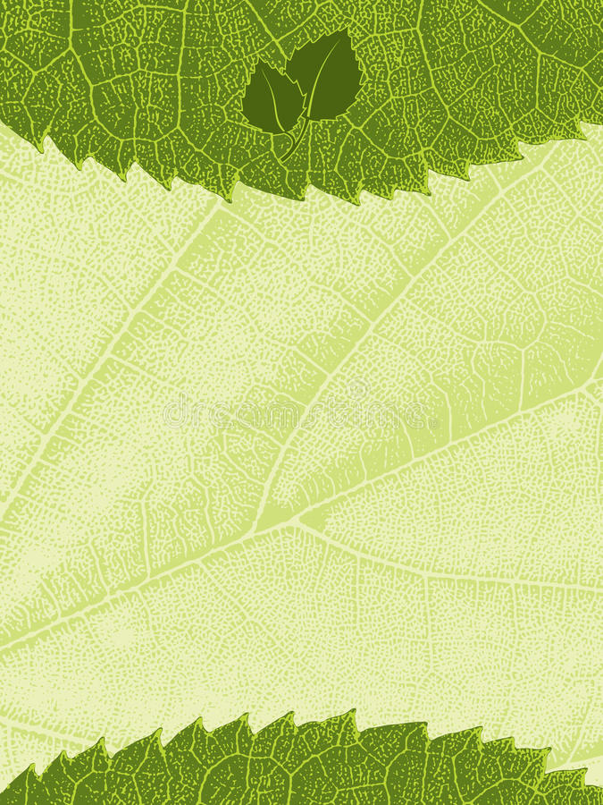 liść szablonu tekstura ilustracji