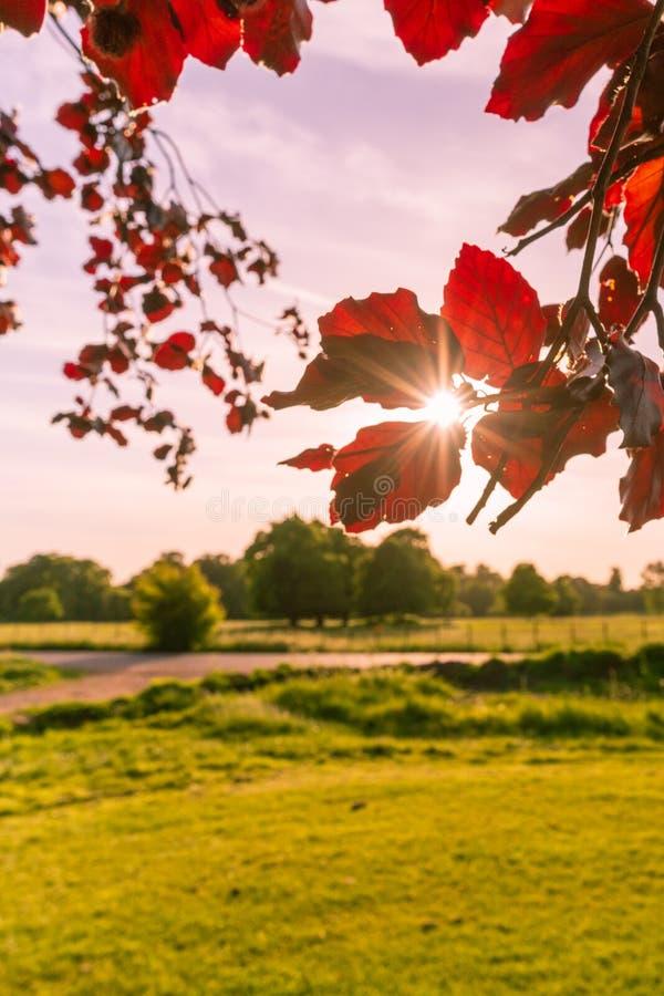 liść target1401_1_ słońce zdjęcia royalty free