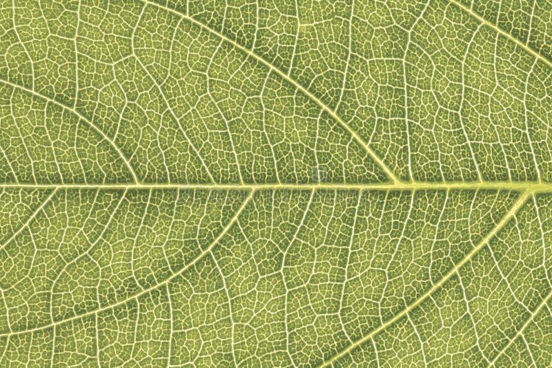 Liść tekstura lub liścia tło dla strona internetowa szablonu, wiosny piękna, środowiska i ekologii pojęcia projekta, zdjęcie stock