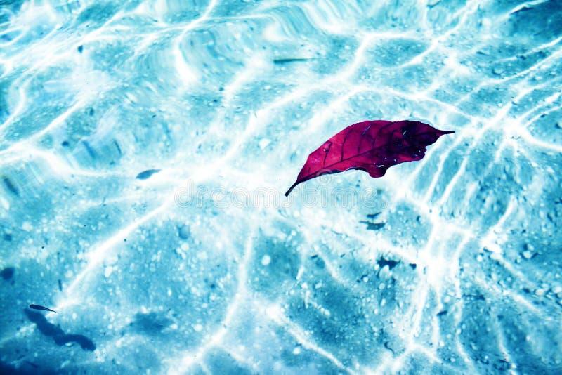 Liść unosi się w pięknym jeziorze z kryształem - jasnym zdjęcia stock