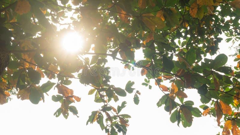 Liść w kolorach zielonym i pomarańczowym fotografia royalty free