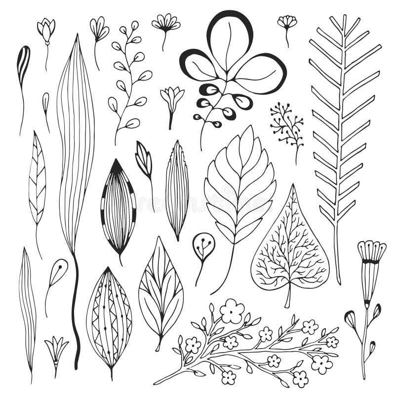 Liść wektorowa ręka rysująca kolekcja Śliczna wektorowa ilustracja z nakreślenie liśćmi ilustracji