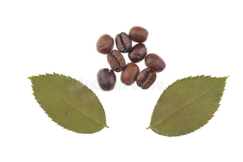 Liść z kawowymi fasolami zdjęcia royalty free