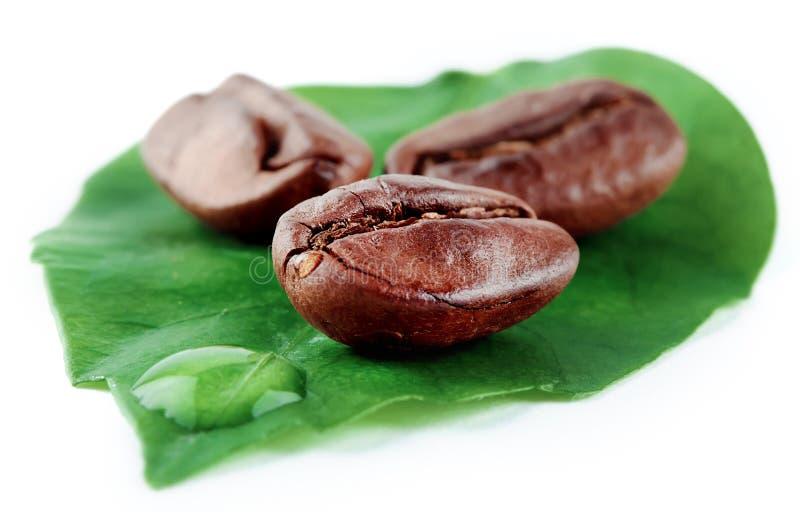 Liść z kawy słomą i adra zdjęcie stock