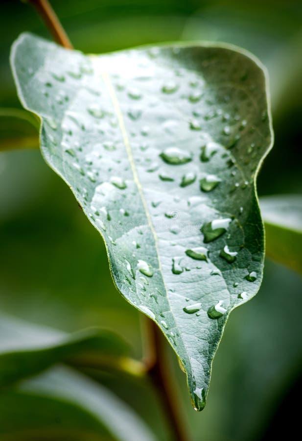 Liść z raindrops obraz stock