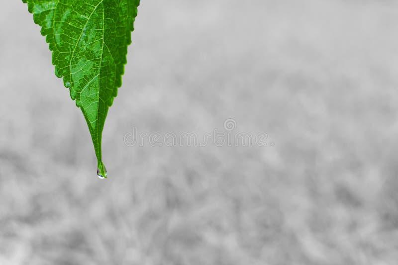 Liść z wodnej kropelki tłem obrazy royalty free