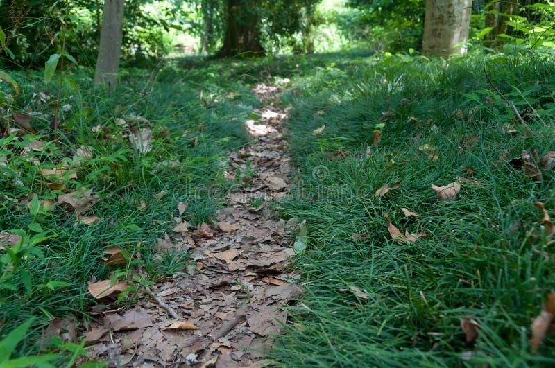 Liść zakrywał ścieżkę, wycieczkuje ślad wzdłuż zielonej trawy zdjęcia stock
