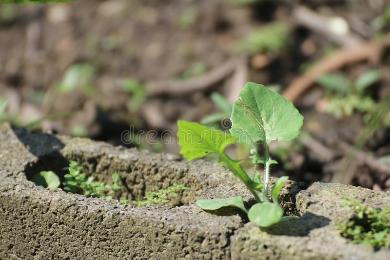 Liść zieleń w białej cegle zdjęcia royalty free