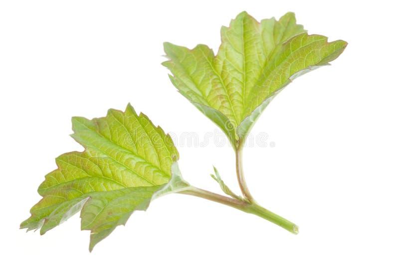 liść zielona natura zdjęcia royalty free