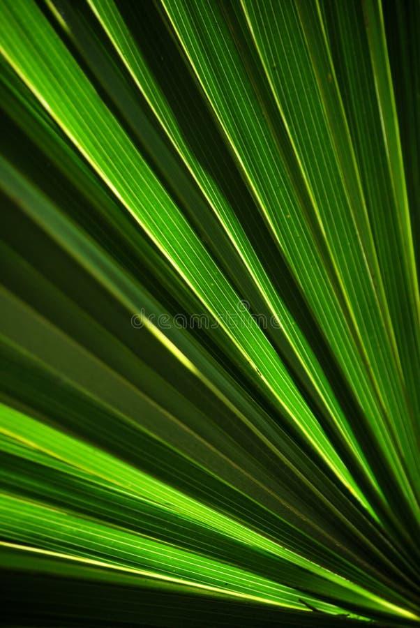 liść zielona palma obrazy stock