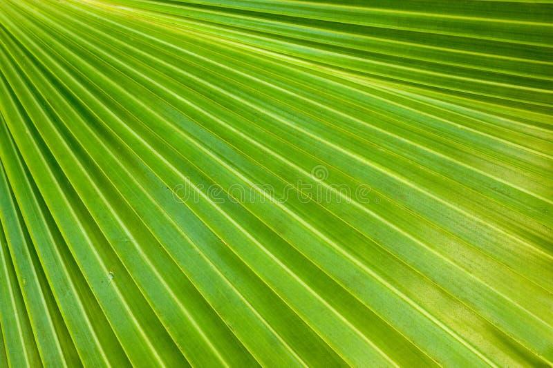 liść zielona palma zdjęcie stock