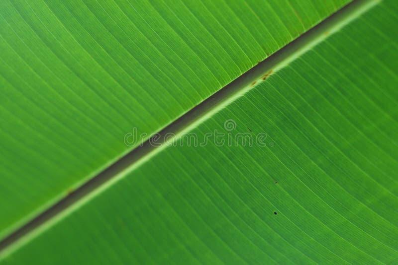 Liść zielona powierzchnia